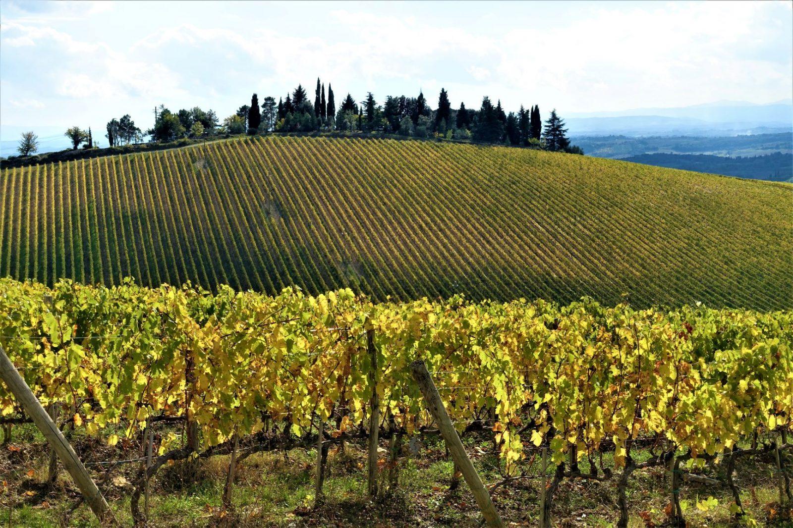 Vindruer i Toscania Chanti