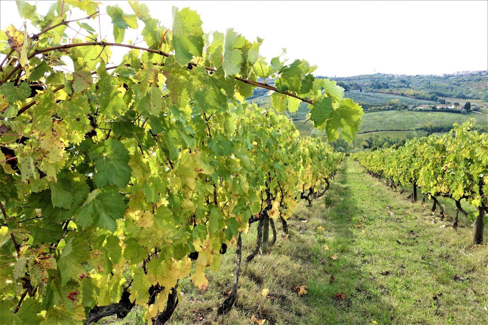 Vinranker i Toscana