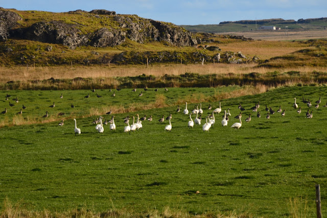 Island er et eldorado for fugletittere