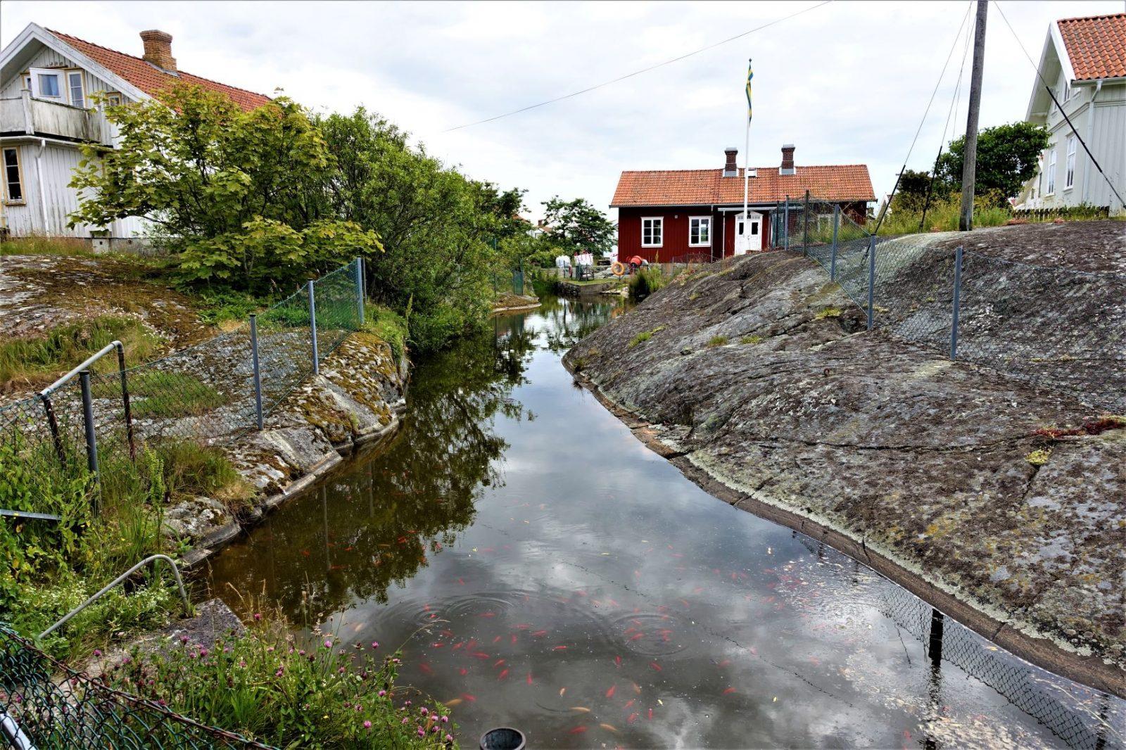 Fantastisk karpedam på käringö svenskekysten