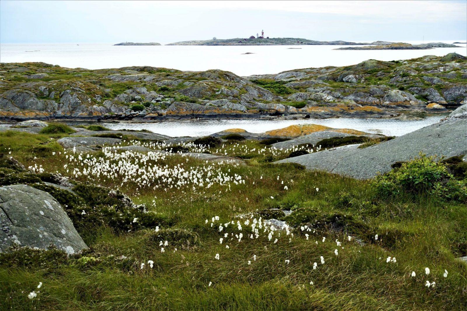Blomstene i Bohuslän Käringø