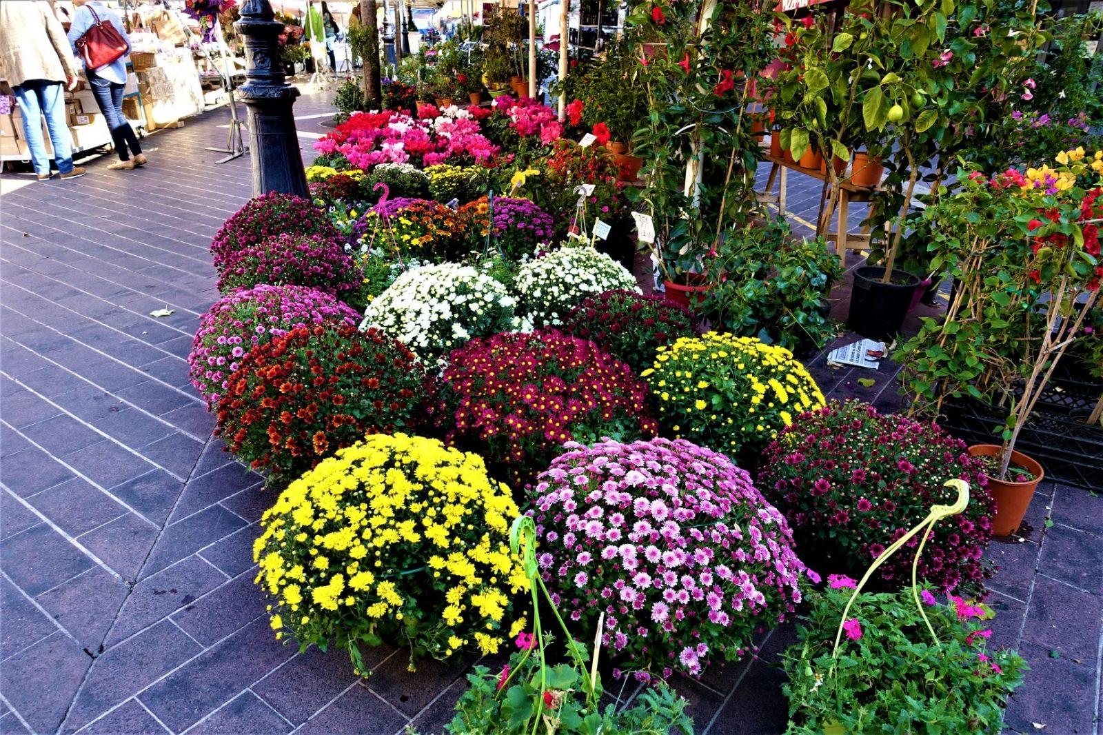 Blomstermarkedet i Cours Saleya