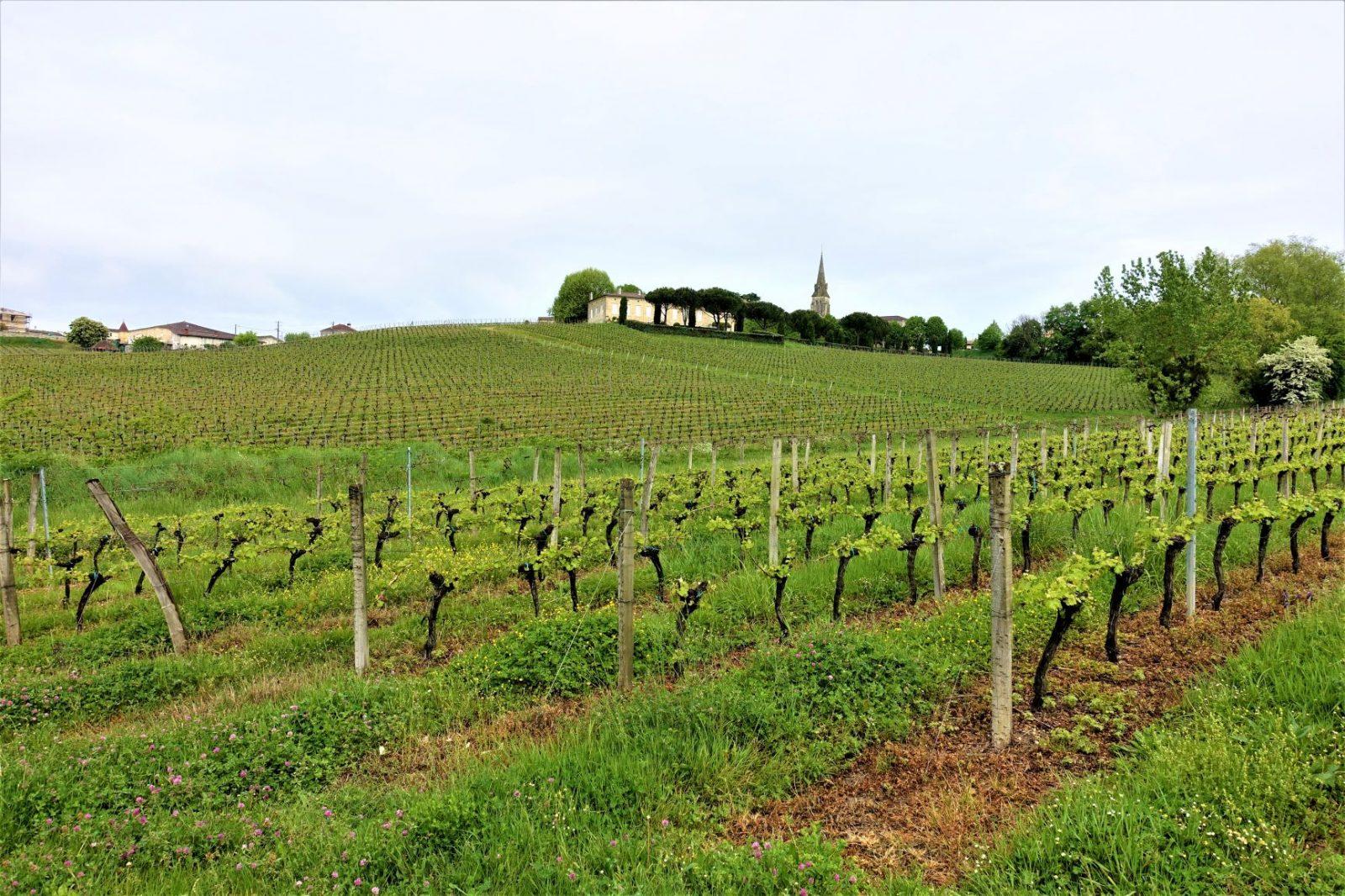 vingård utenforbordeaux