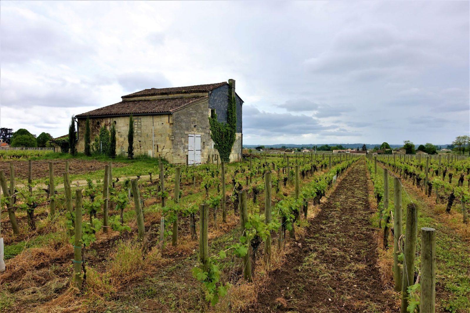 Vingård i Frankrike ekslusiv