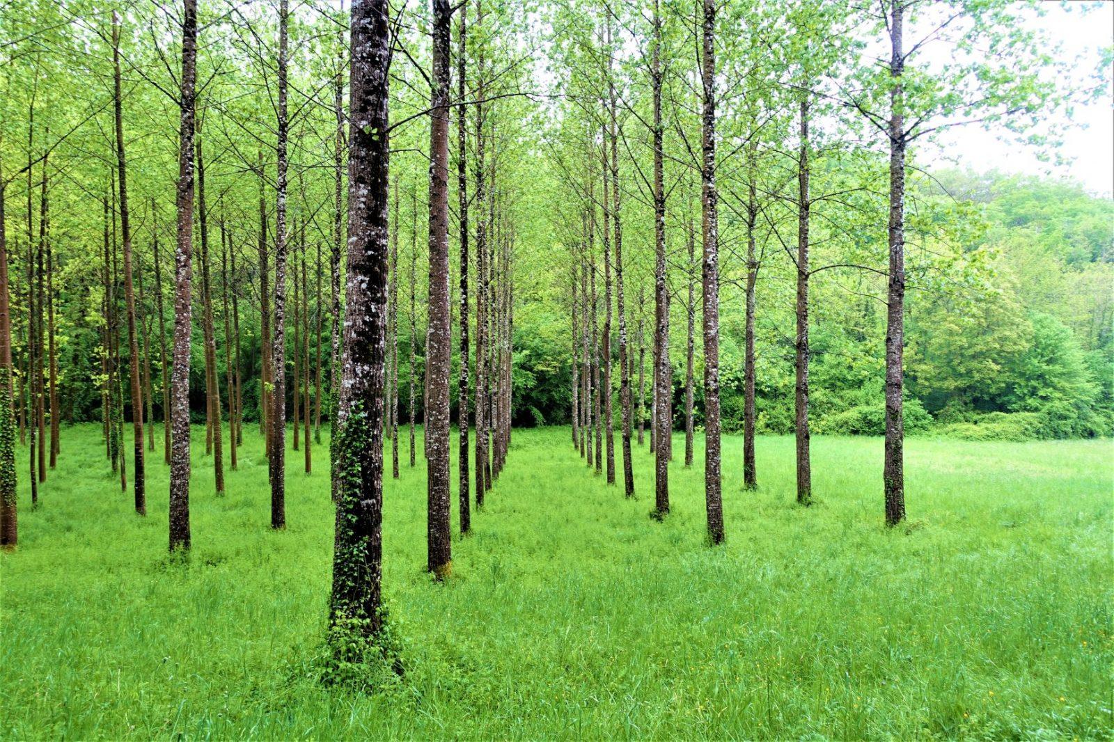 Vakre skogsveier i frankrike