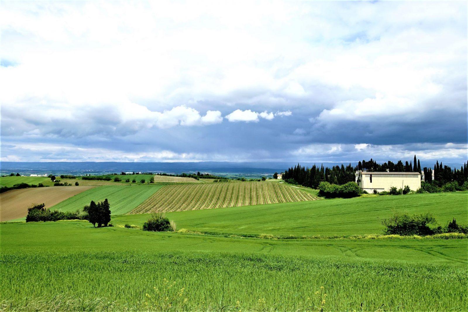 vingårder i frankrike