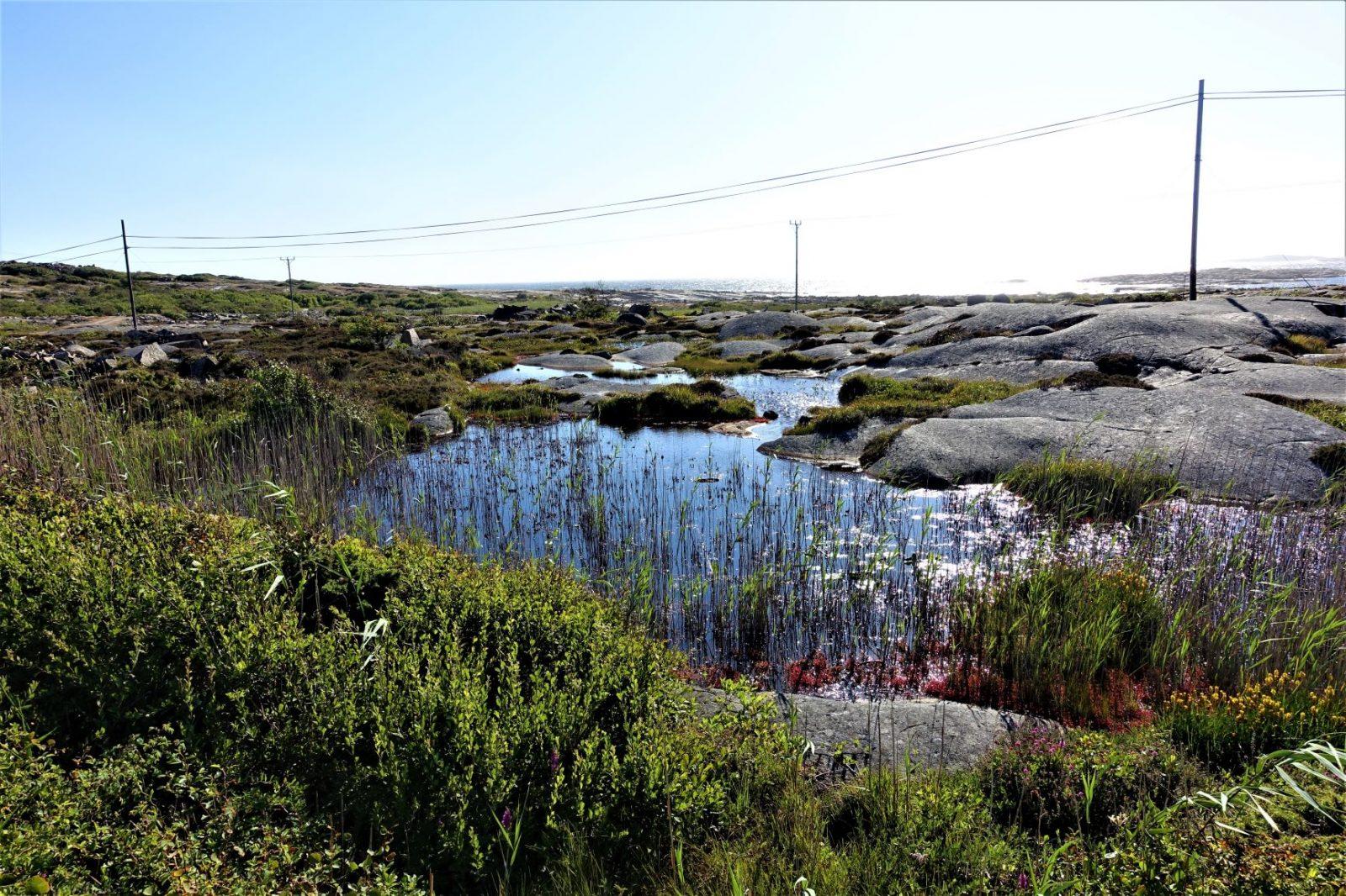 vakker dam med siv på bohus malmøn