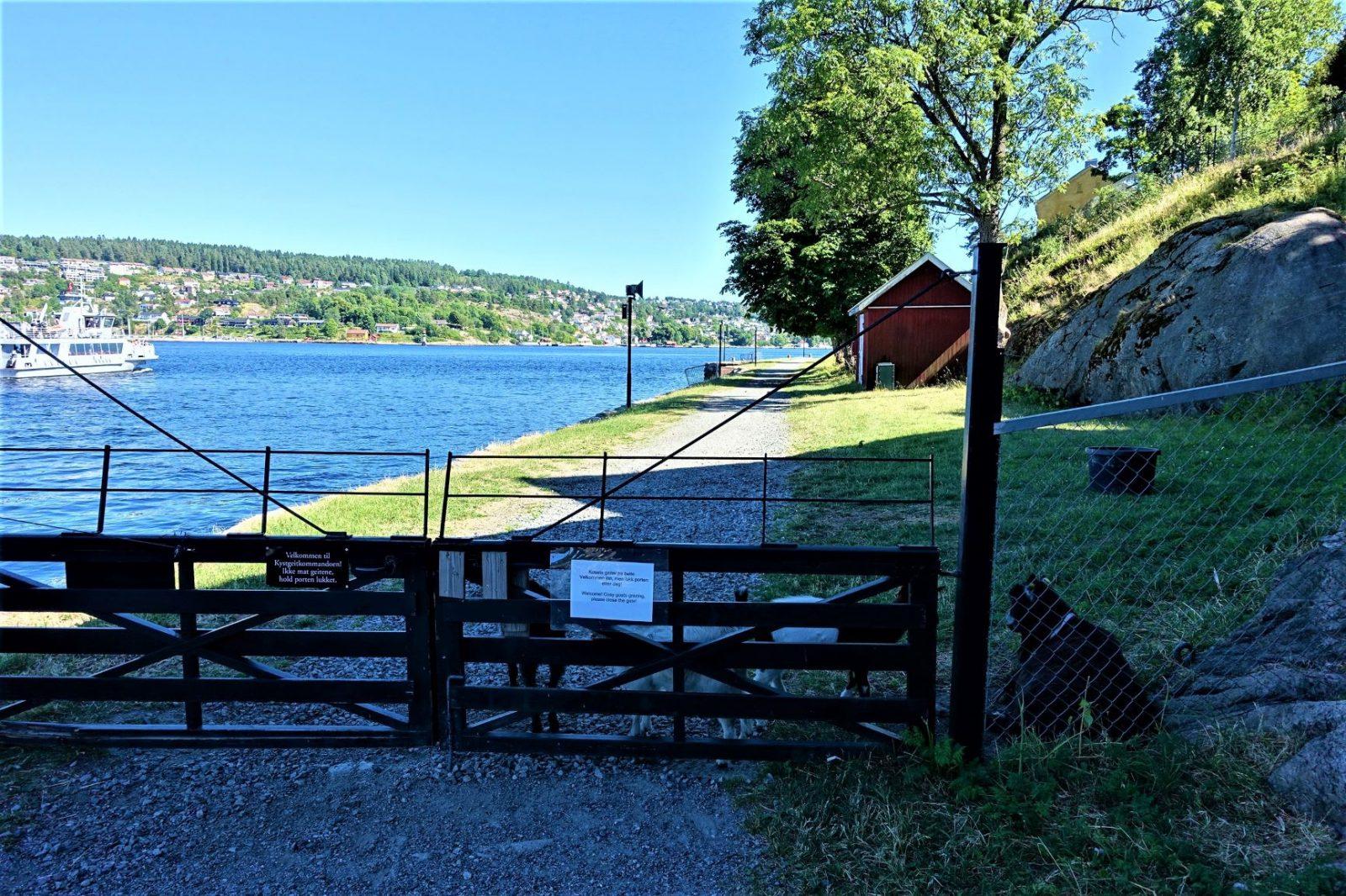 Vandretur oscarsborg porten inn til gjeitene på kaholmen syd