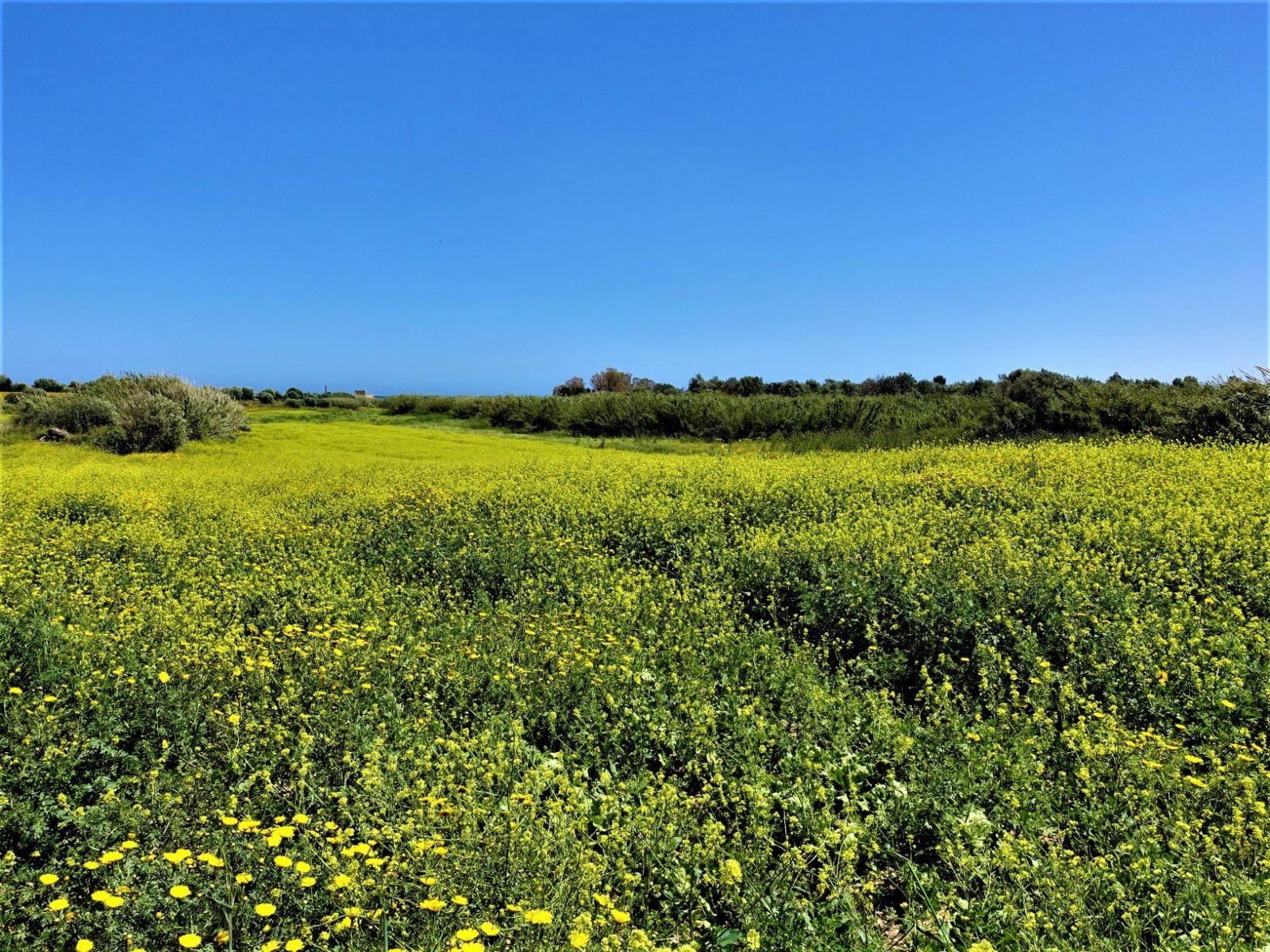 Blomsterenger Sicilia