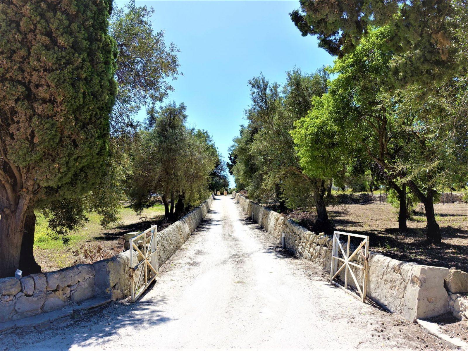Vingårder Sicilia