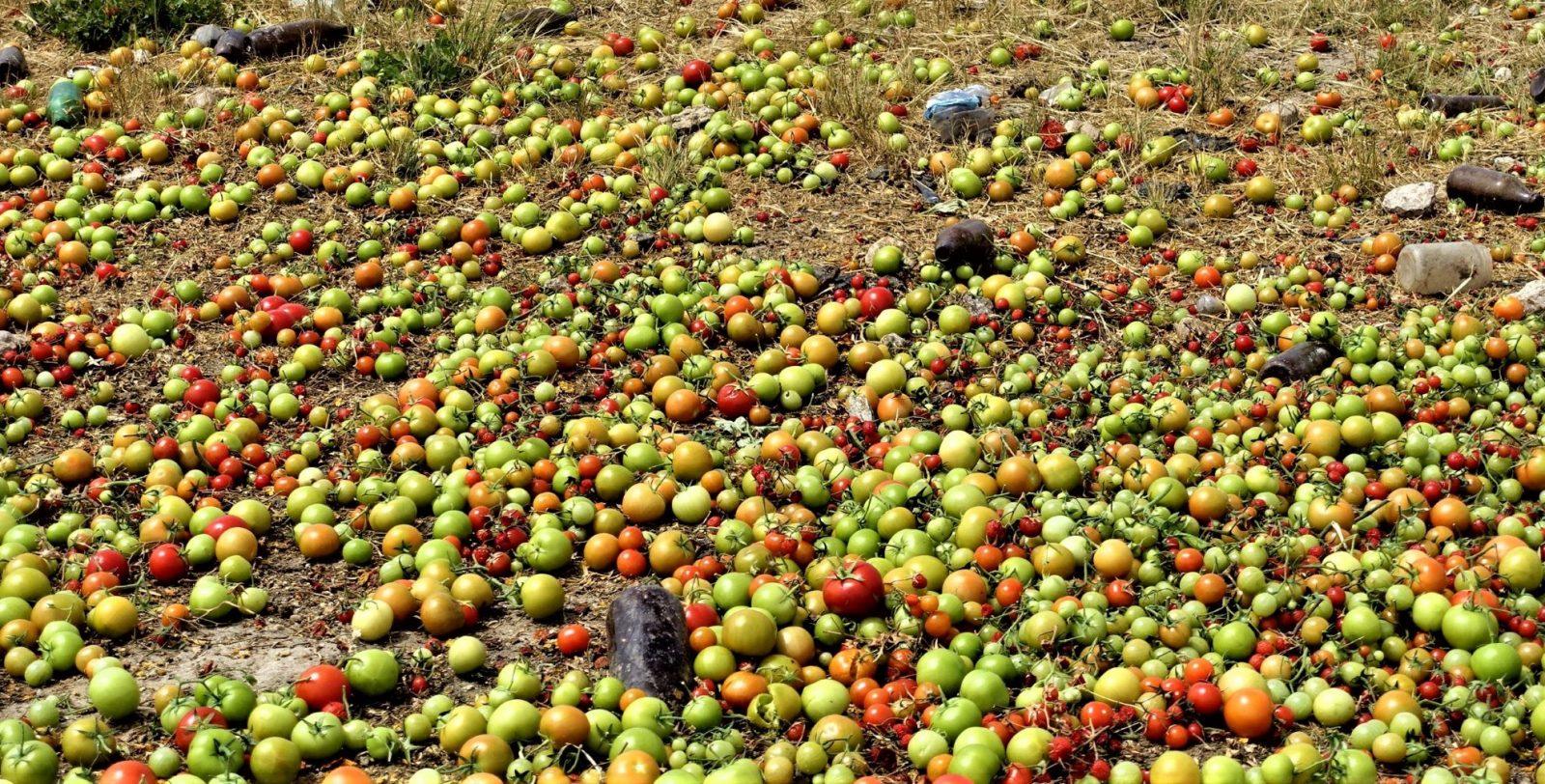 Tomatene kastet og blir til jord på Sicilia