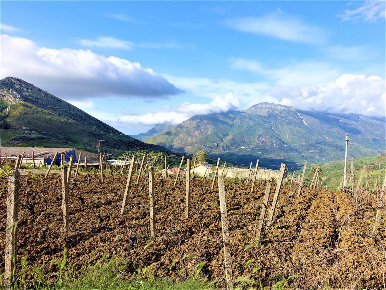 Fjellheimen på Sicilia vinranker