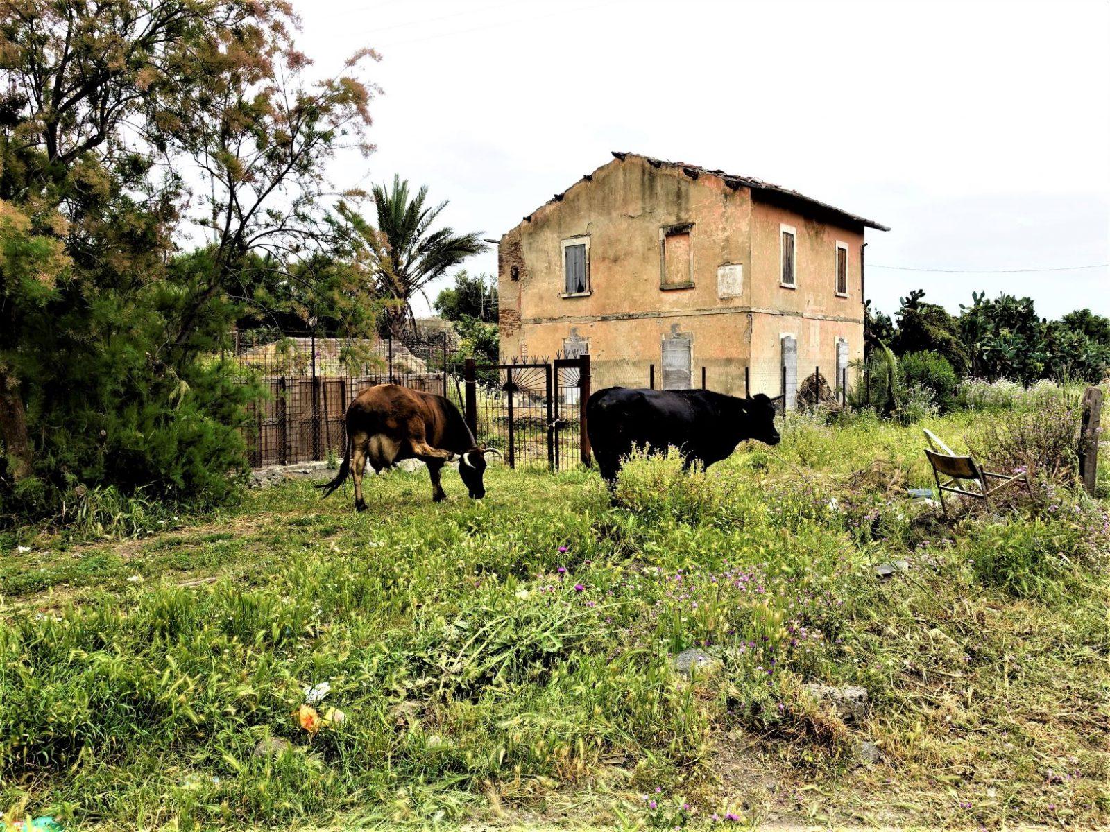 Kuer på Sicilia Catania