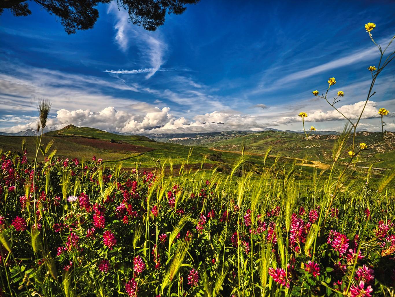 vakre røde blomster på sicilia