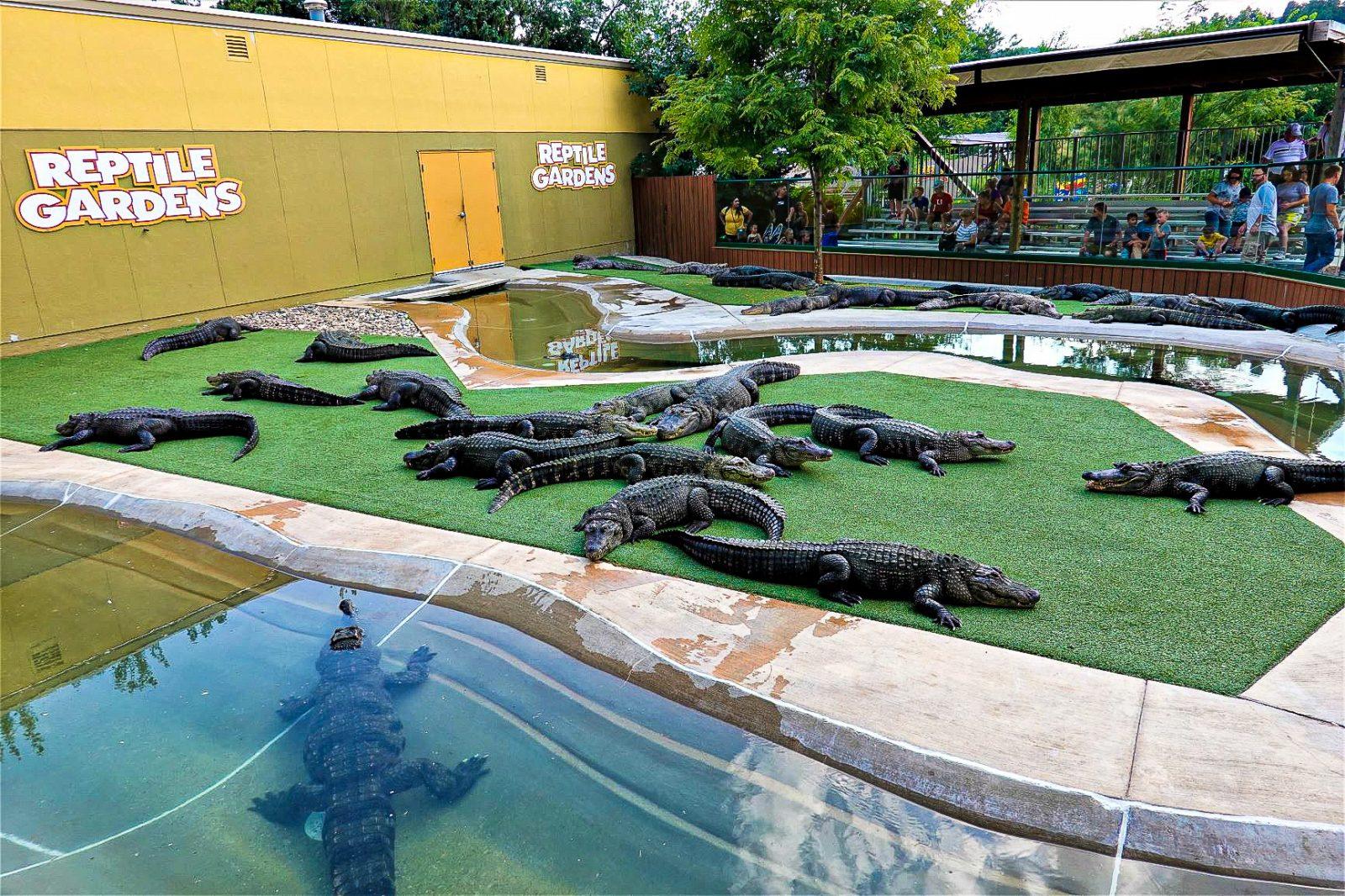 krokodilleoppvisning usa