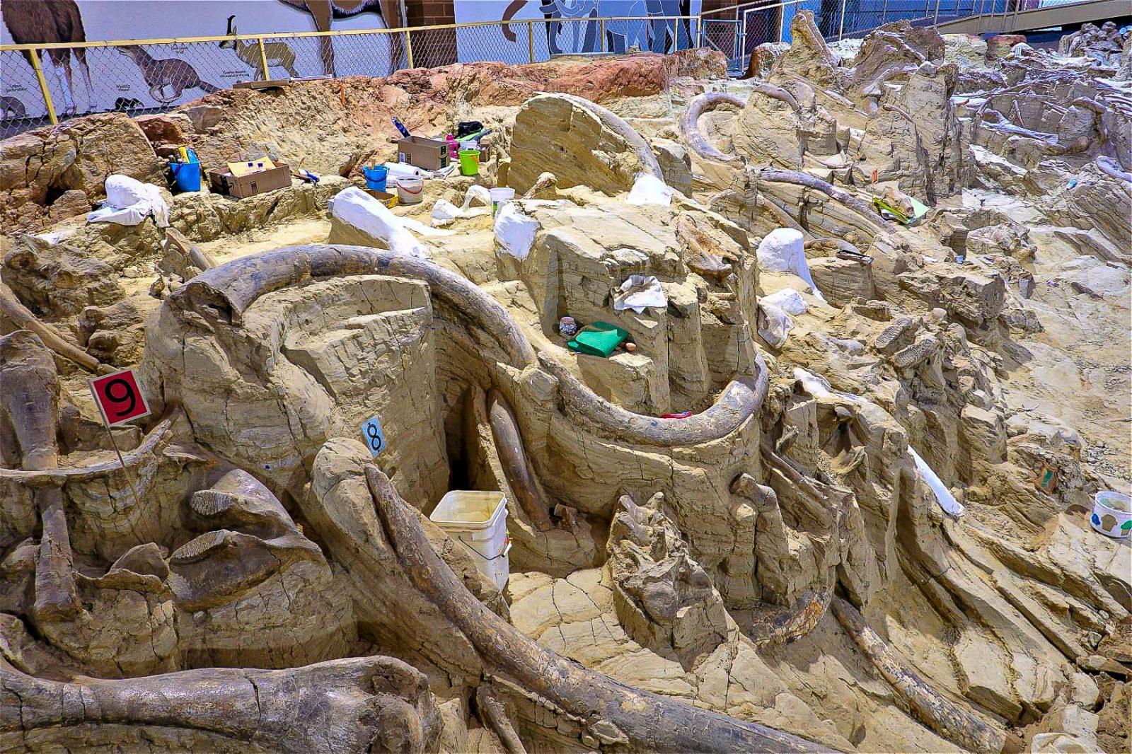 mammut utgravinger i usa