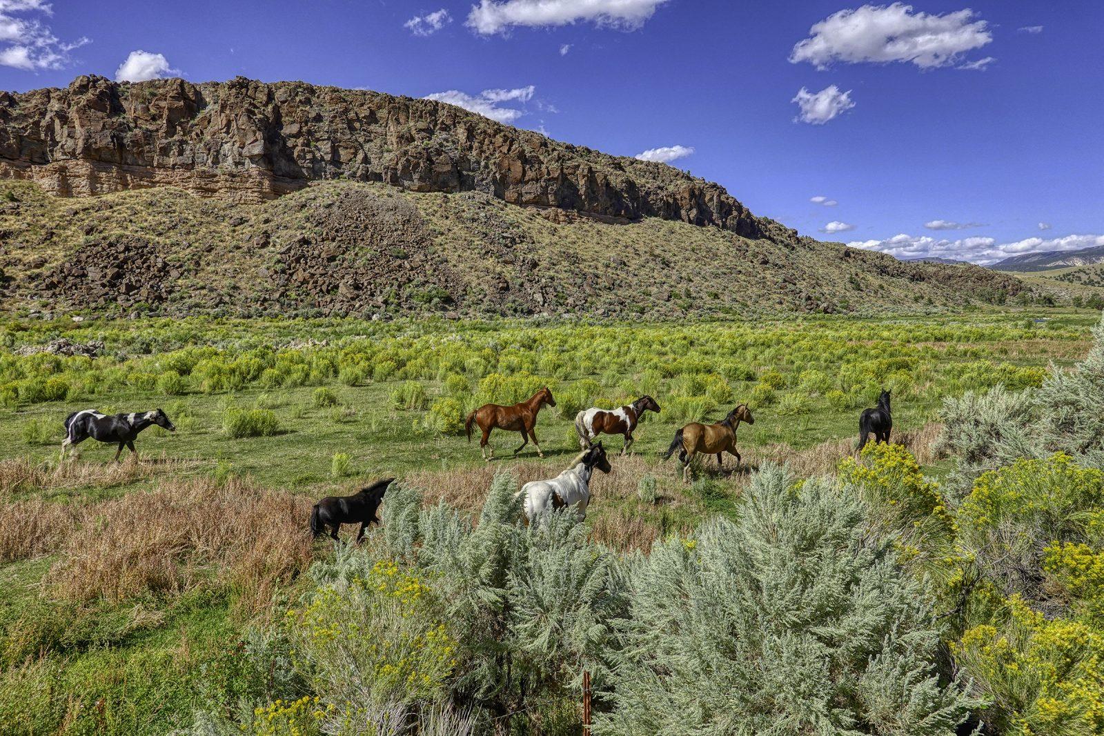 hesteflokker i usa