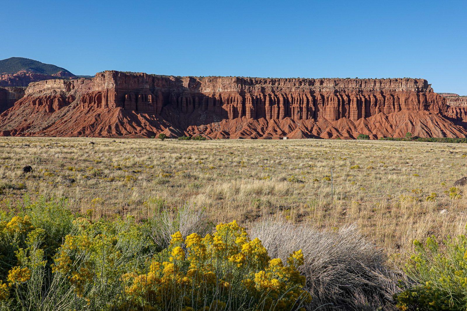 Dixie Forrest Utah usa