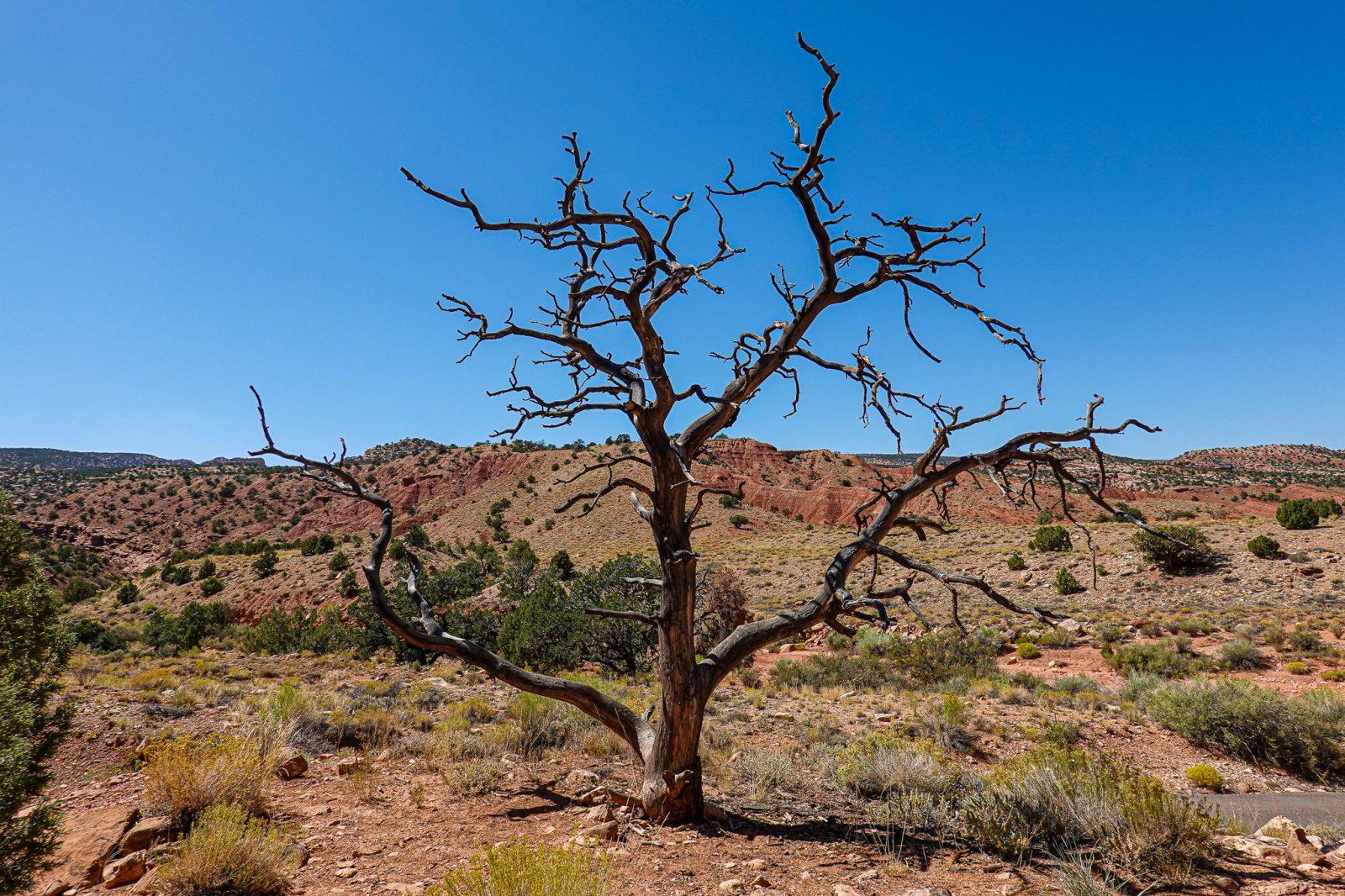 ørkentre i utah
