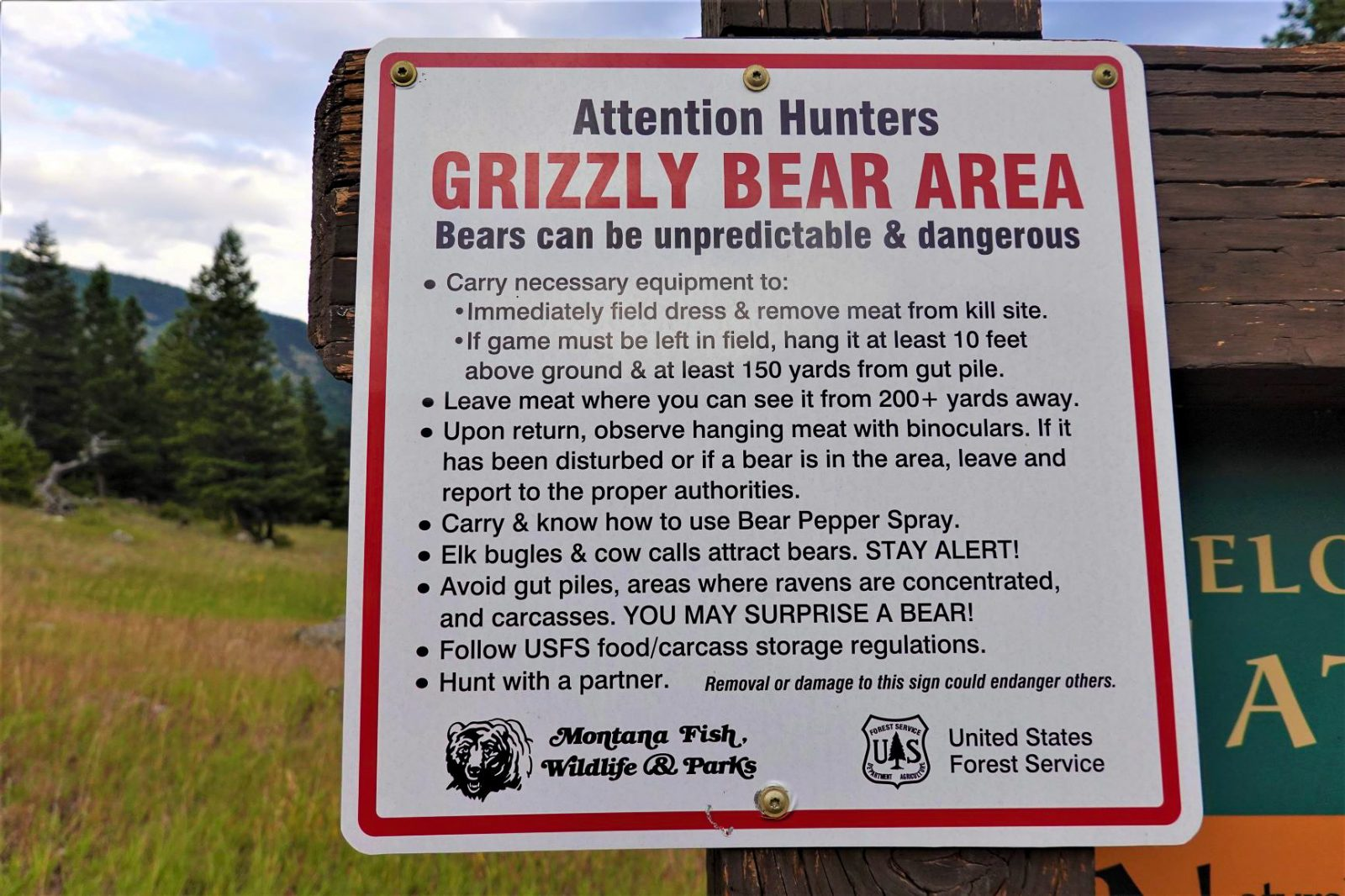 grizzly bear area