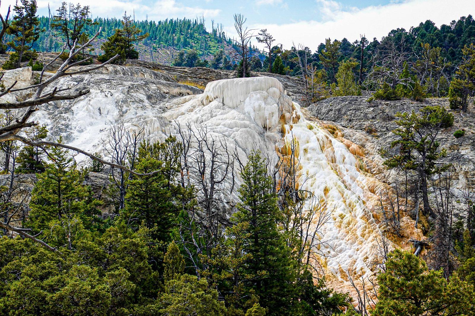 mamut i yellowstone