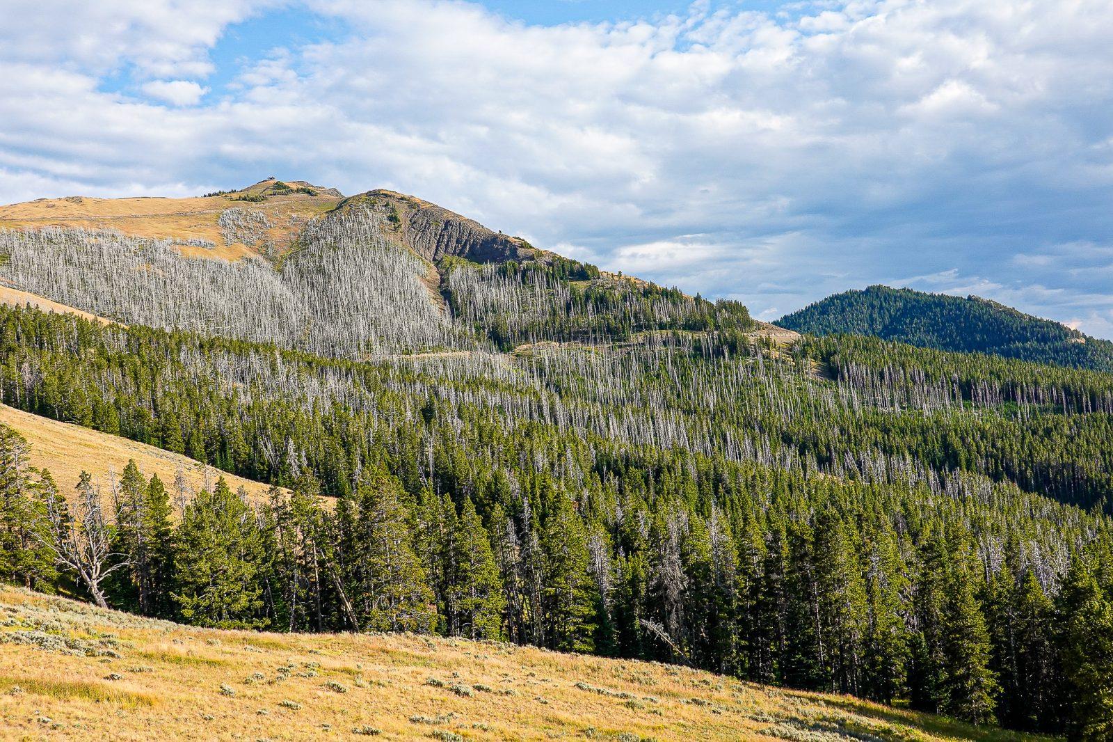 skogbranner i yellowstone