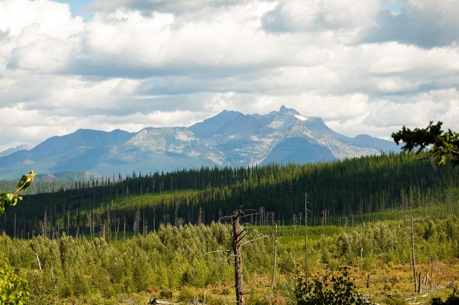 Toppen av Glacier natioenalpark