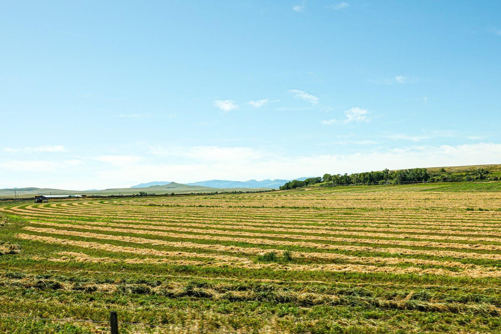 landbruk i usa